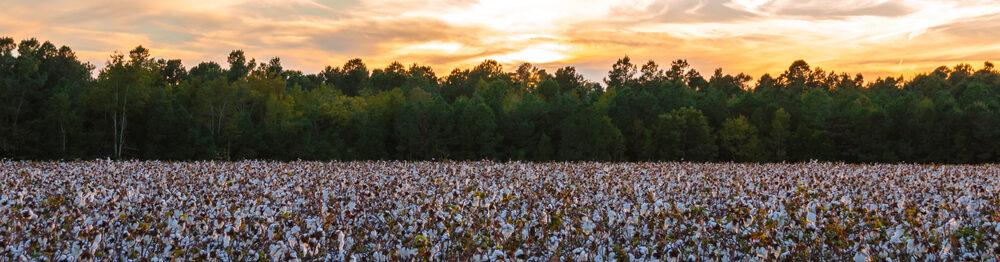 Roundup Lawsuits in Georgia