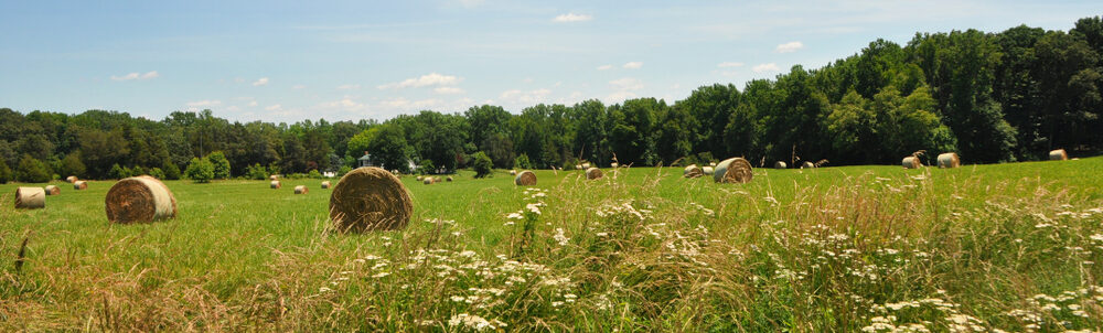 Roundup Lawsuits in Virginia