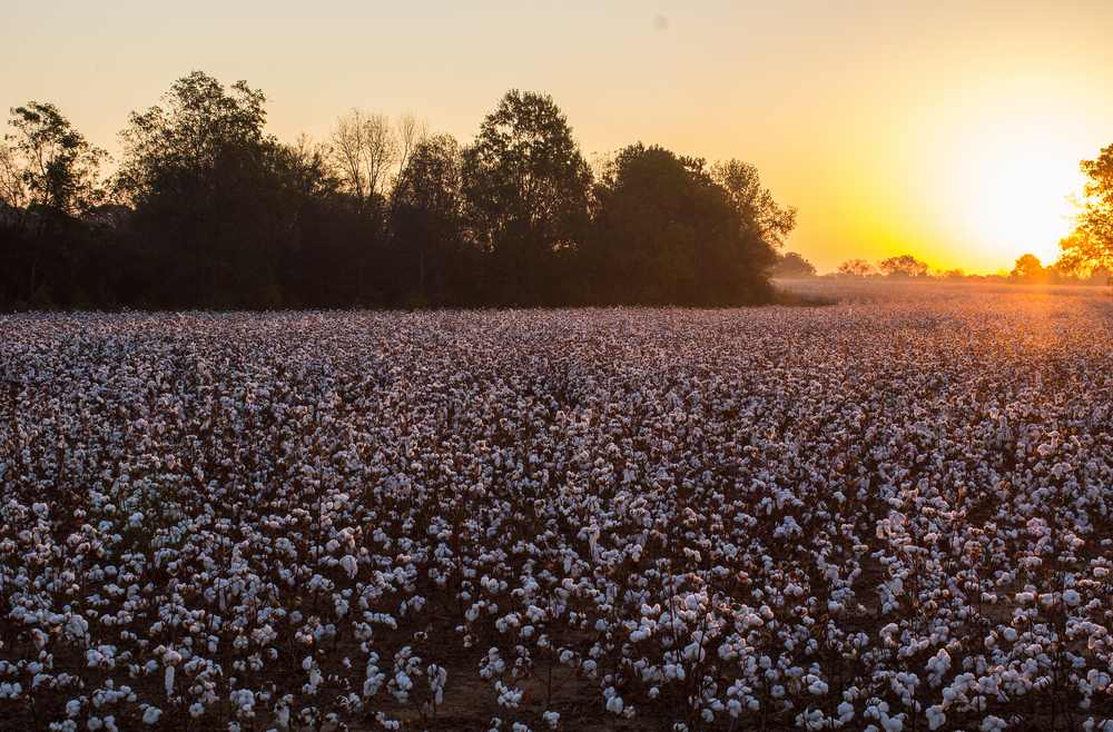 Roundup Lawsuits in Alabama
