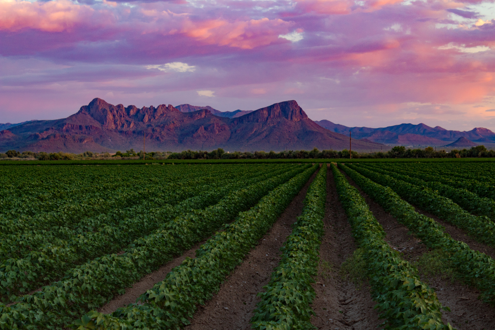 Roundup Lawsuits in Arizona