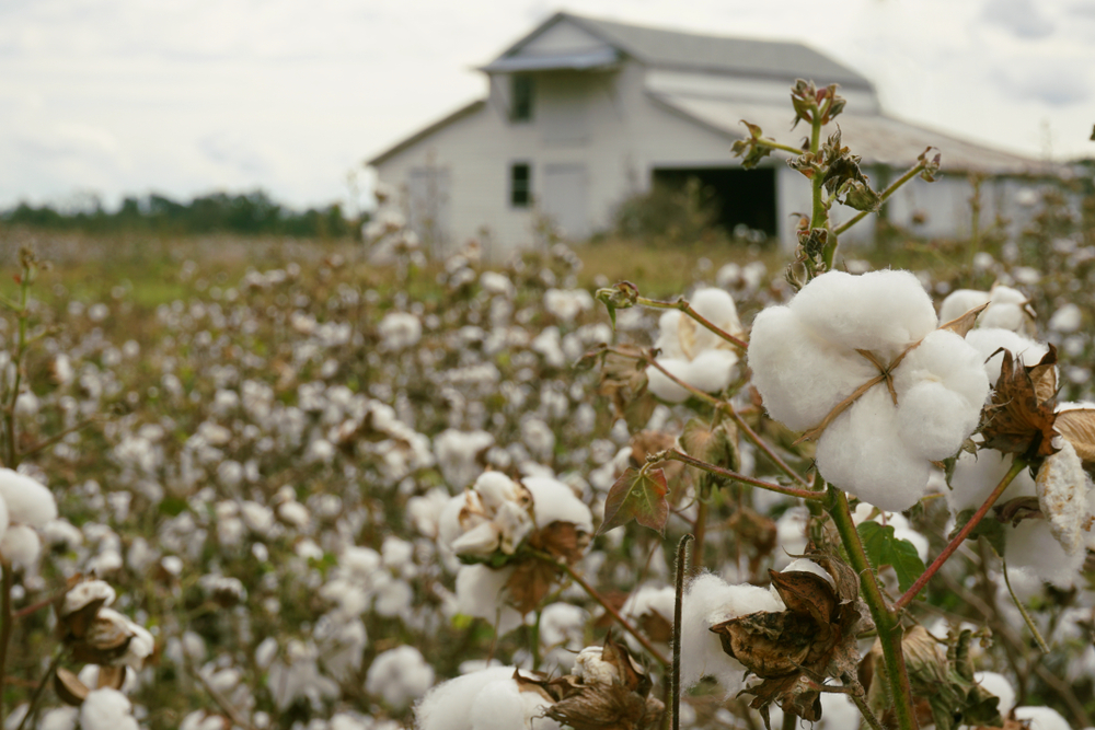 Roundup Lawsuits in South Carolina
