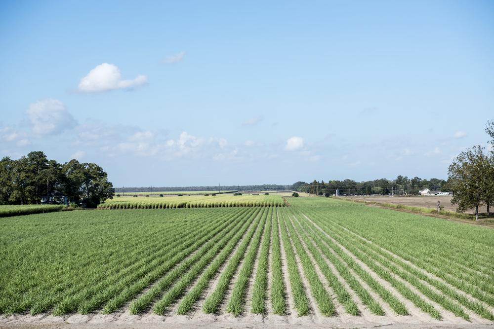 Roundup Lawsuits in Louisiana